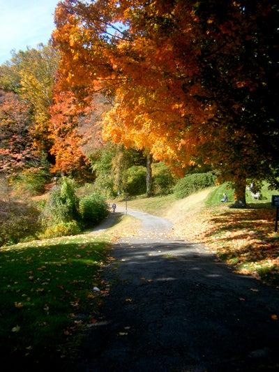 City Dozen: Helen Rosner's Pioneer Valley