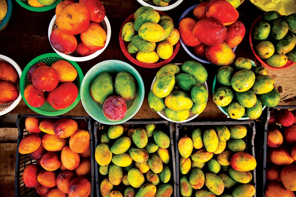 Mangoes for sale at a roadside stand