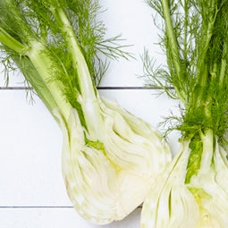 Spring Produce Guide: Fennel
