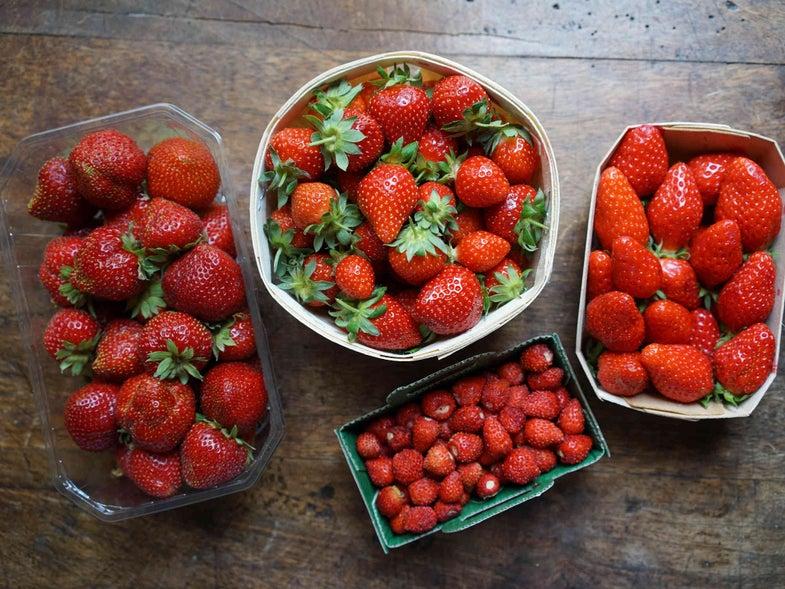 Strawberry Types