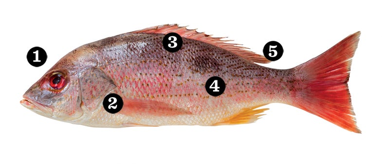 Buying and Storing Whole Fish
