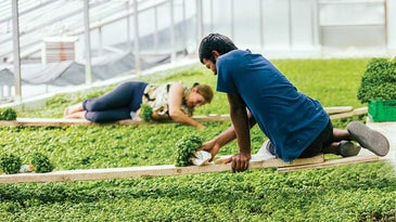 pesto greenhouse