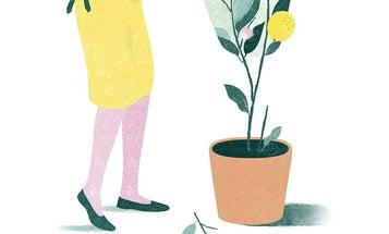 My Life With Marilyn, the Family Lemon Tree