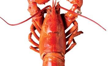 Shore to Door: Mail-Order Maine Lobster