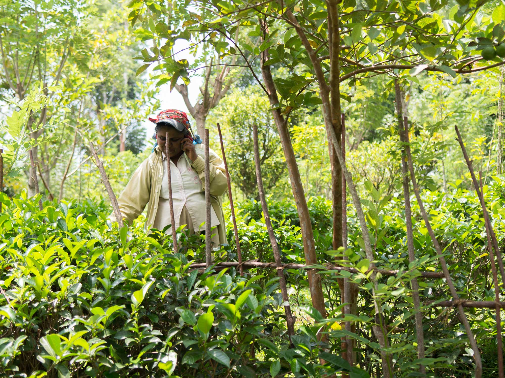 Drink the Excellent Tea From the Sri Lankan Estate Trying to Change the Brew Business