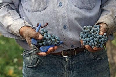 Why We Love Argentine Wine