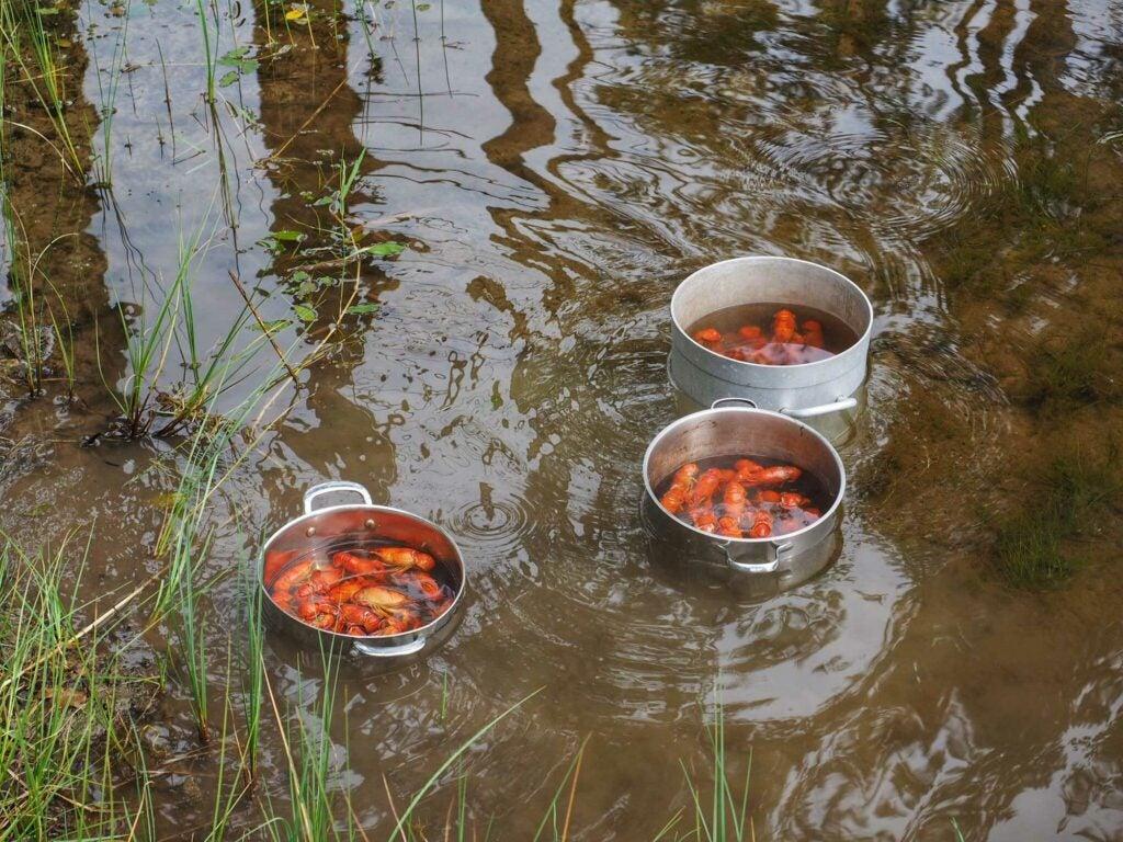 crayfish kettle