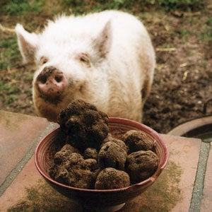 Buying Truffles