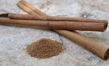 Spice of the Season: Cinnamon