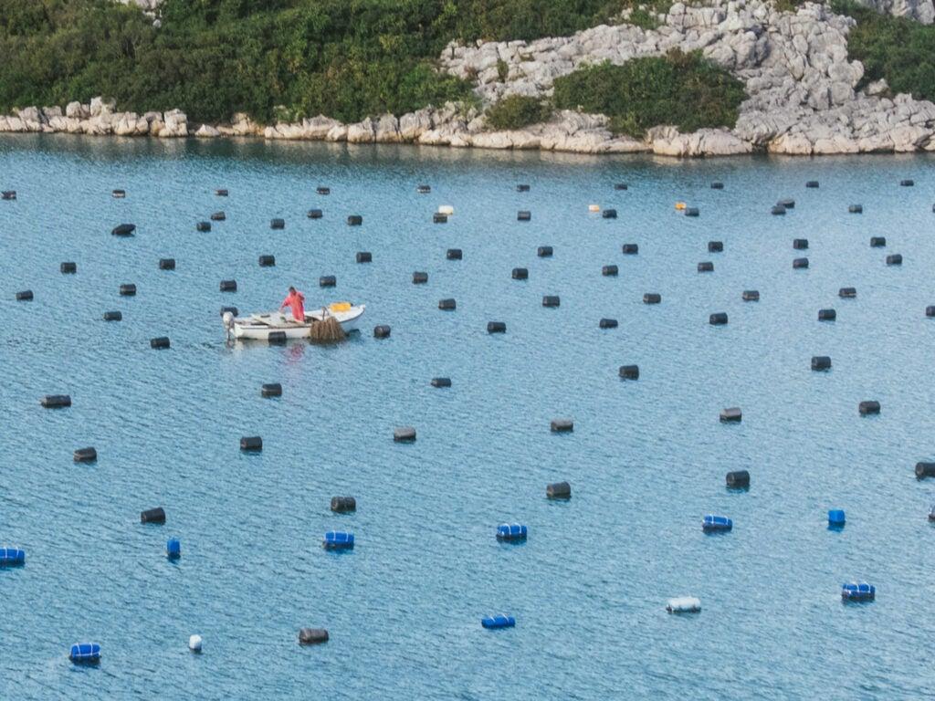 Oyster Farmer, Croatia