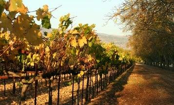 5 Milestones in California Wine