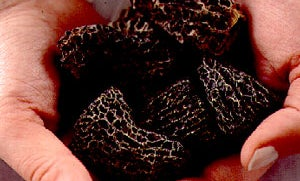 About Dried Morels