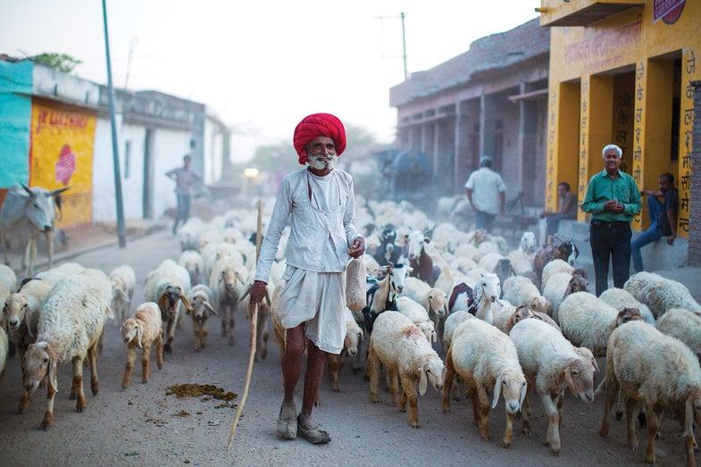 Amid the Flock