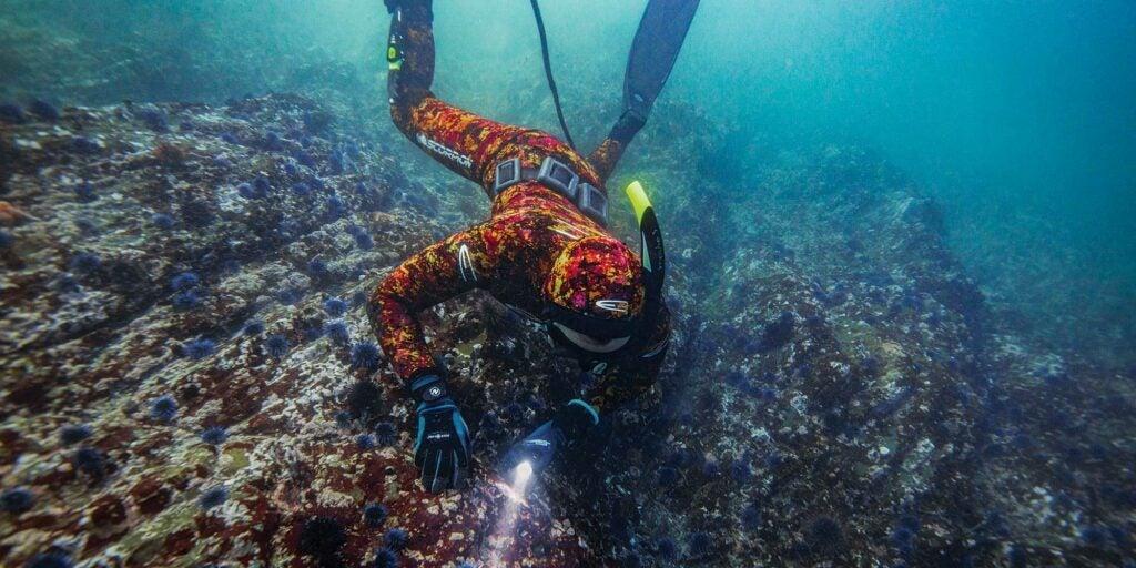 Ali Bouzari gathering Sea Urchins