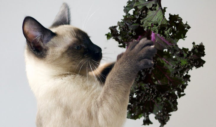 Weekend Reading: Kale-Loving Cats, Beer and Cookie Pairings, and More