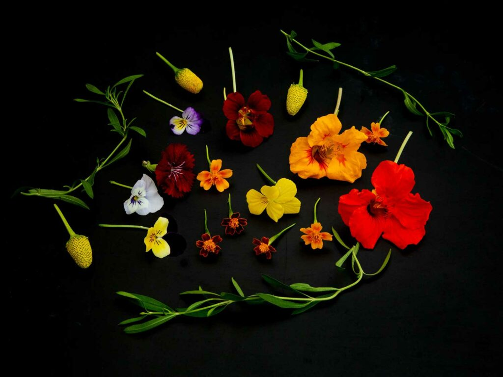 Flowers from Frutos del Guacabo