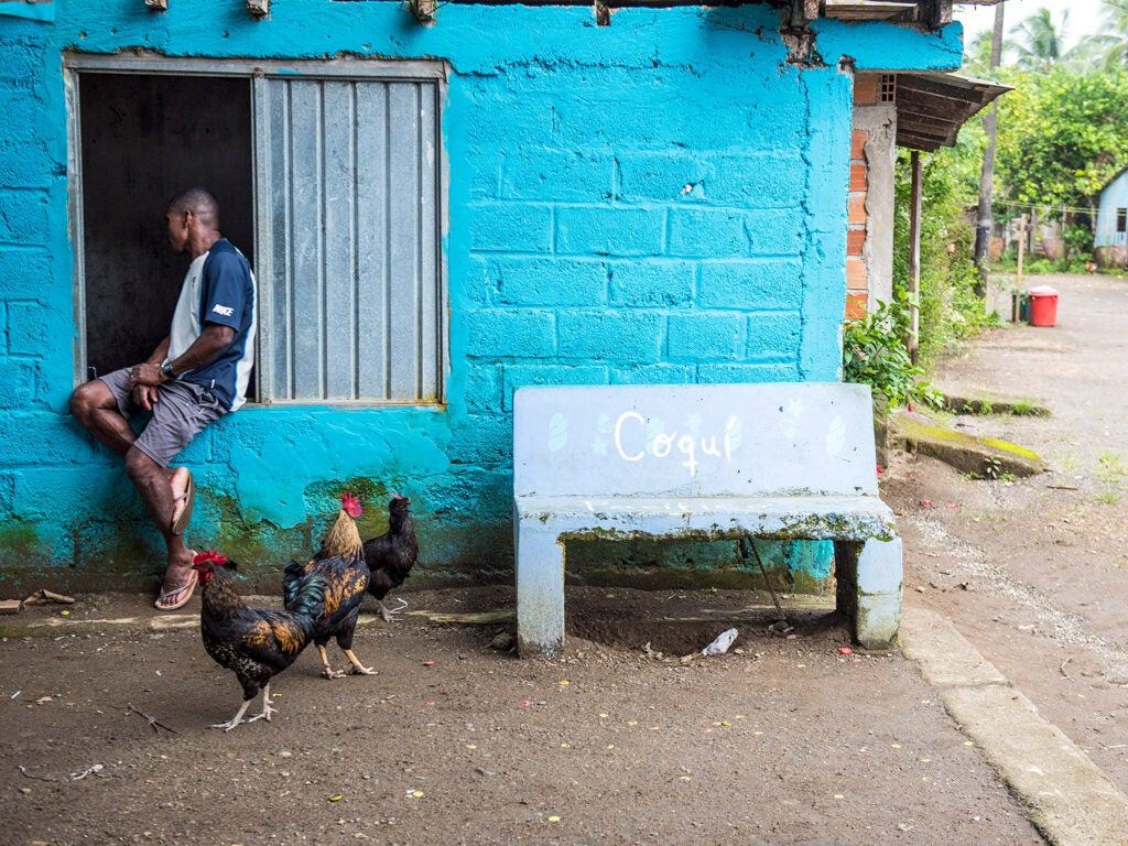 roosters and a man next to blue building