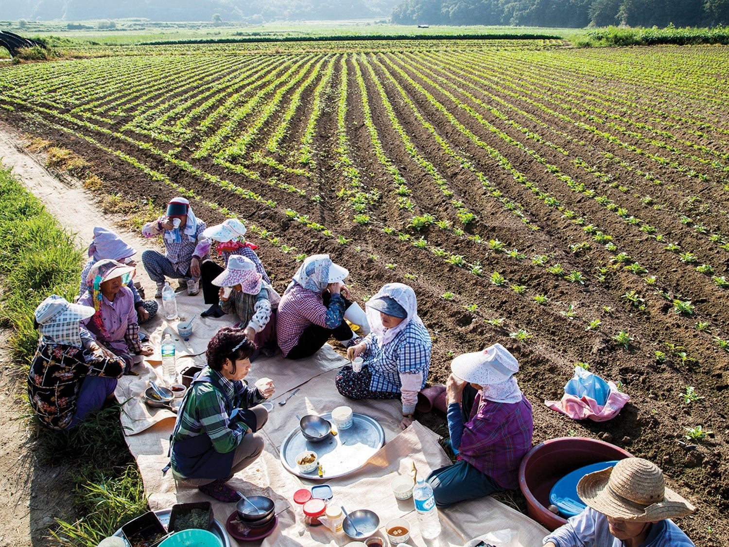This Communal Meal Is How Korean Farmers Get Through the Day