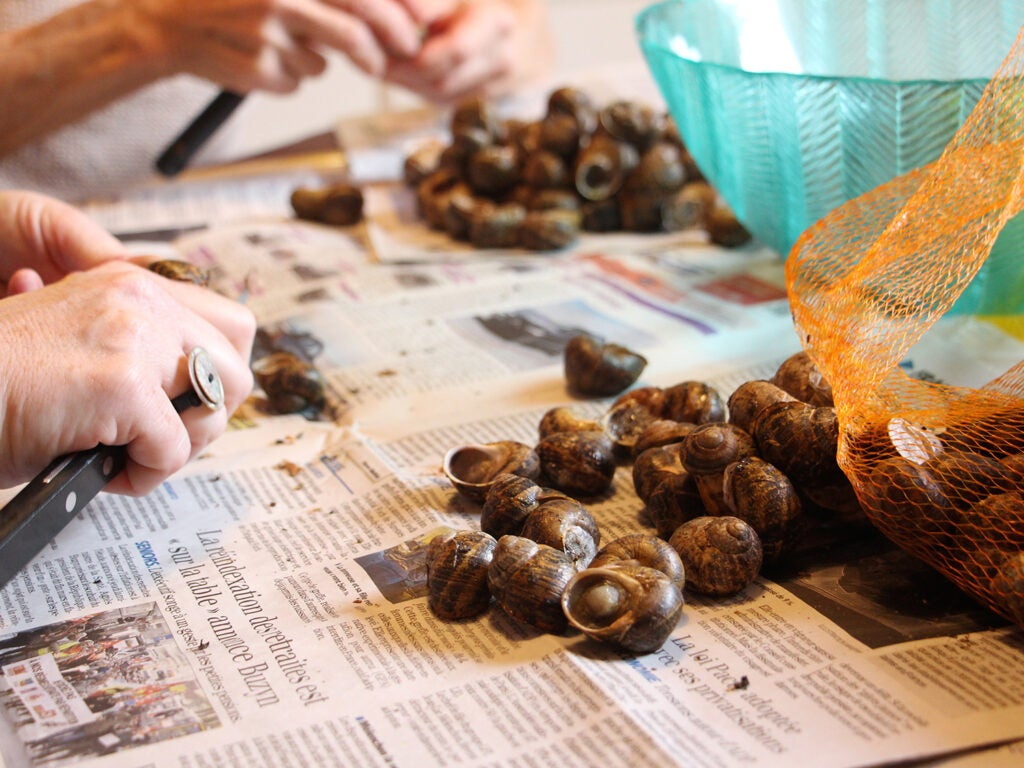 snails being prepared on top of newspaper