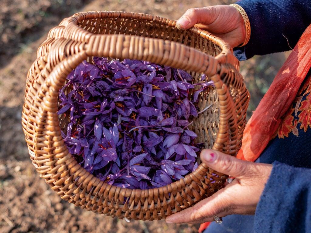a wicker basket full of purple saffron flowers
