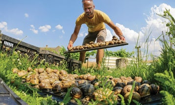 Snails Are Making a Comeback in Austria, Thanks to This Farmer