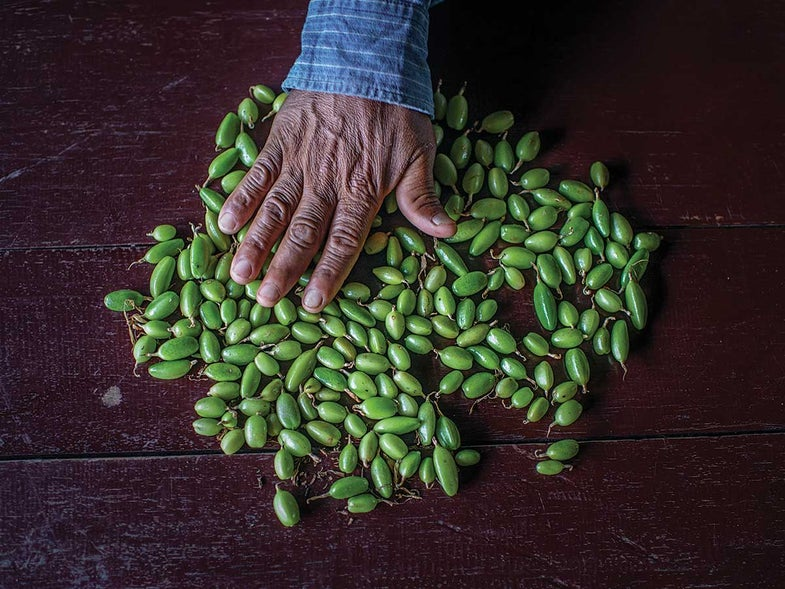 Meet the Farmer Shaking Up the Guatemalan Cardamom Trade
