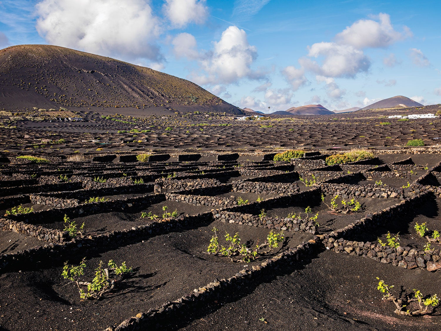 The Ingenious Growing Process That Makes These Canary Island Wines So Good