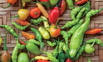 Hot Peppers Are a Way of Life for This Brazilian Indigenous Community