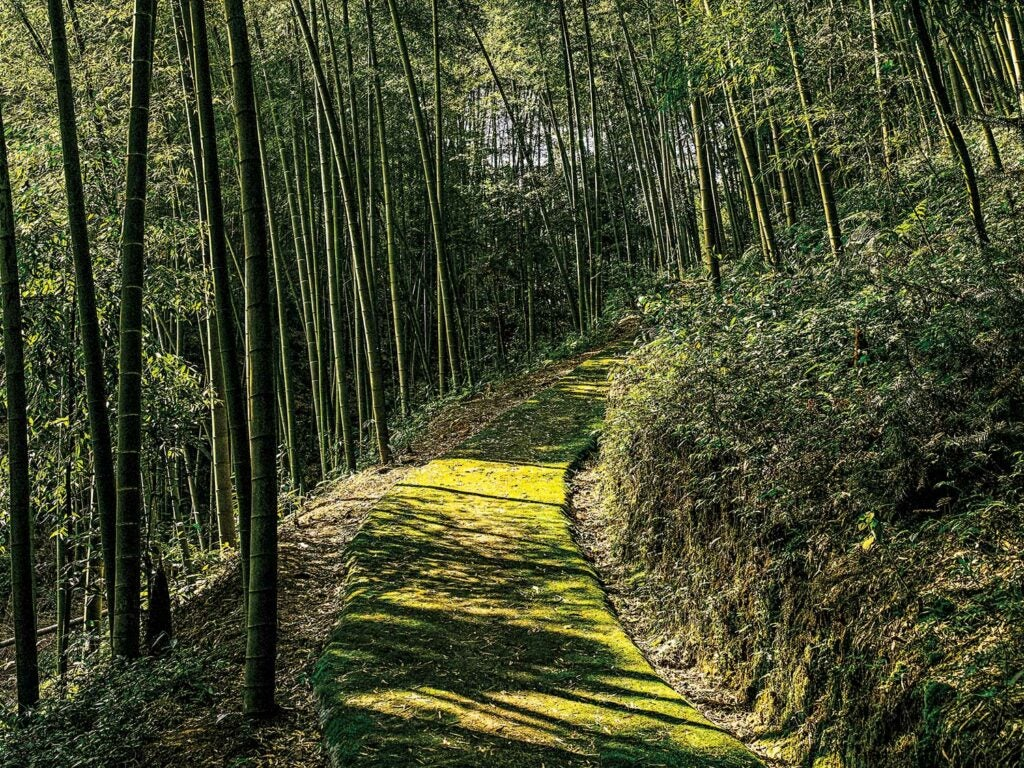 Sloping footpath leading to home in the Bamboo Sea.
