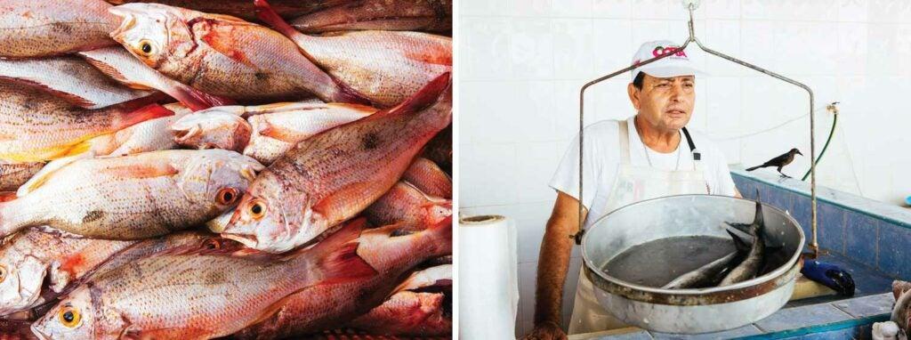 Red snapper and a fishmonger at La Cruz market.