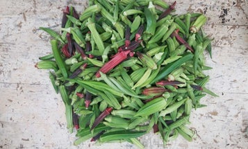 The Proper Way to Cook Okra, According to an Okra Obsessive