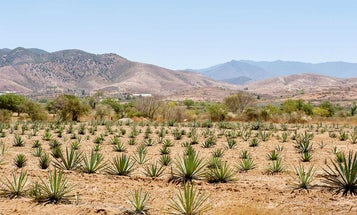 What Does the Future of Mezcal Look Like in Mexico?