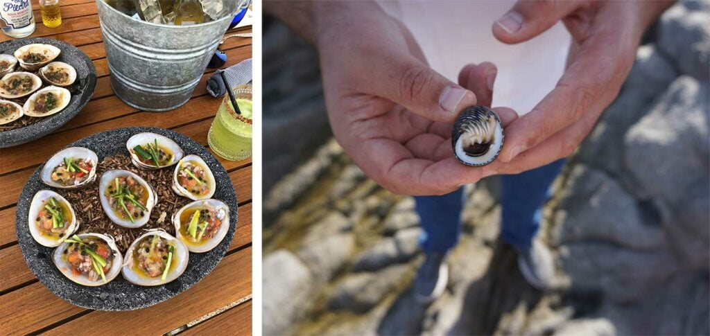 Chocolate clams on the beach at Esperanza; Chef Gomez forages for sea snails along the rocks of the resort.