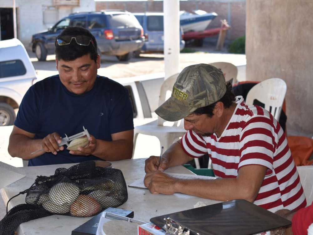 Clam fishermen measuring clams at COBI's Puerto Libertad Fishery Improvement Project.