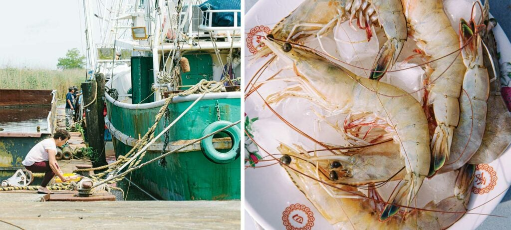 A shrimping boat in southern Louisiana; fresh Gulf shrimp on ice.