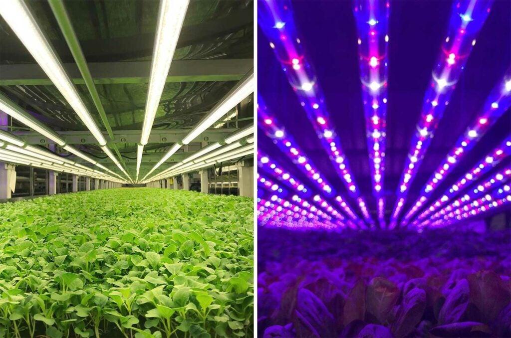 LED lights used to grow crops at Aerofarms.