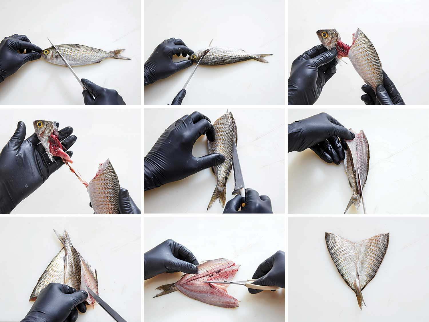 How to butterfly a fish.