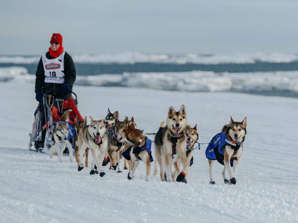 Dog sled team mushers in Alaska