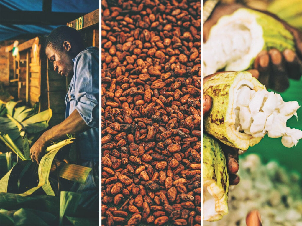 From left: Cutting banana leaves, which are used to line fermentation boxes; fermented and dried cocoa beans; fresh cocoa beans are surrounded by a sweet white pulp that tastes nothing like chocolate.