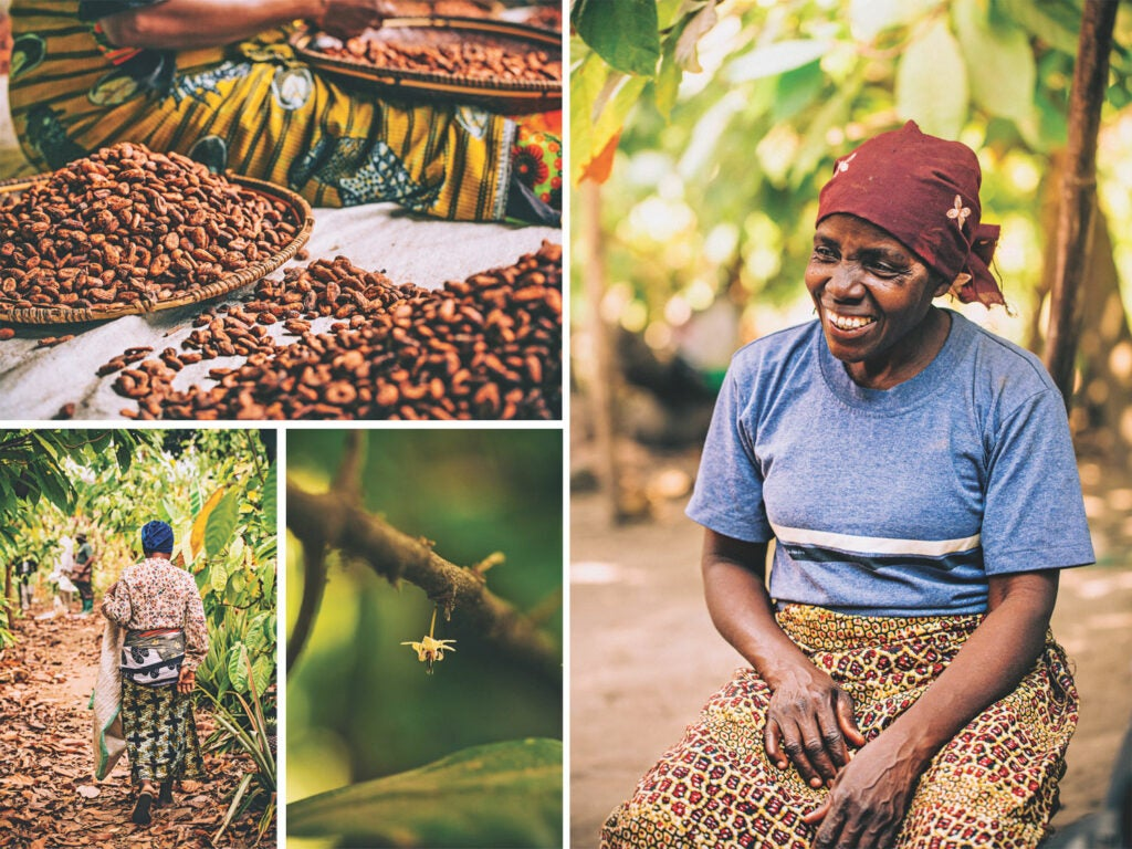Clockwise from top left: Cocoa beans being sorted; Bahati Sanjingu, a Mbingu grower; the flower of a cocoa tree; harvesting the day's fruit.