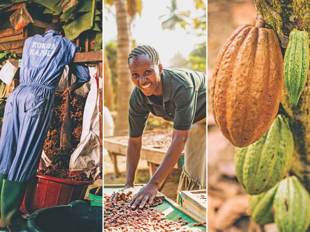 Left to right: Moving a batch from a fermentation bin; arranging beans on drying racks; cocoa beans in various stages of fermentation and drying.