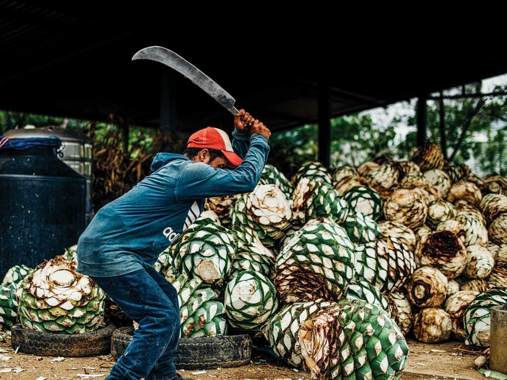A worker at the Lalocura distillery removes the agave plants' spiky leaves.