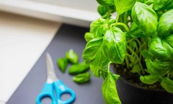 The Best Kitchen Scissors