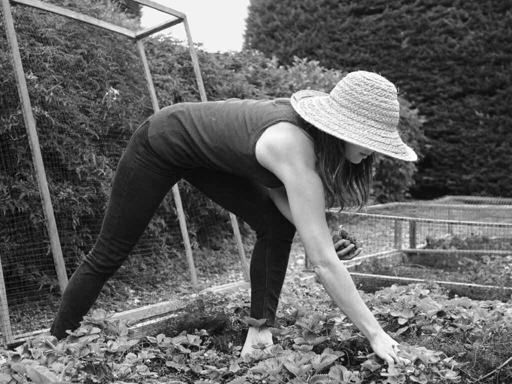 Fanny Singer picks fresh, crisp greens for Alice Waters' favorite salad dish.