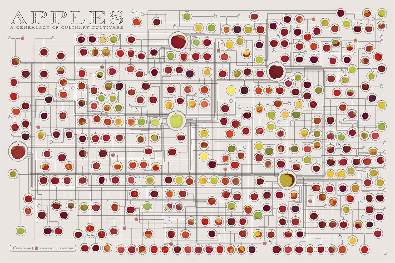 Popchart Labs Food Prints