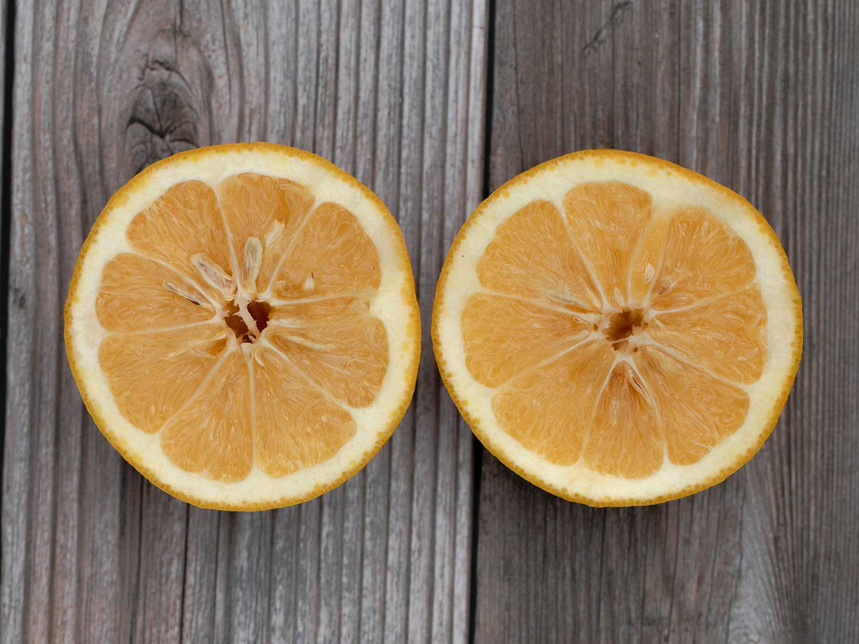 Seville orange on wood