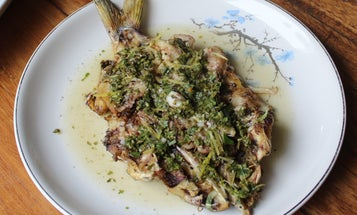 Grilled Catfish with Chimichurri