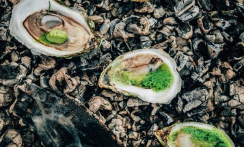 Ember-Roasted Oysters with Love Butter