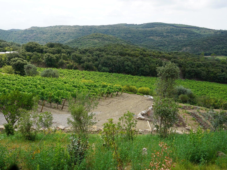 Languedoc Biodynamic