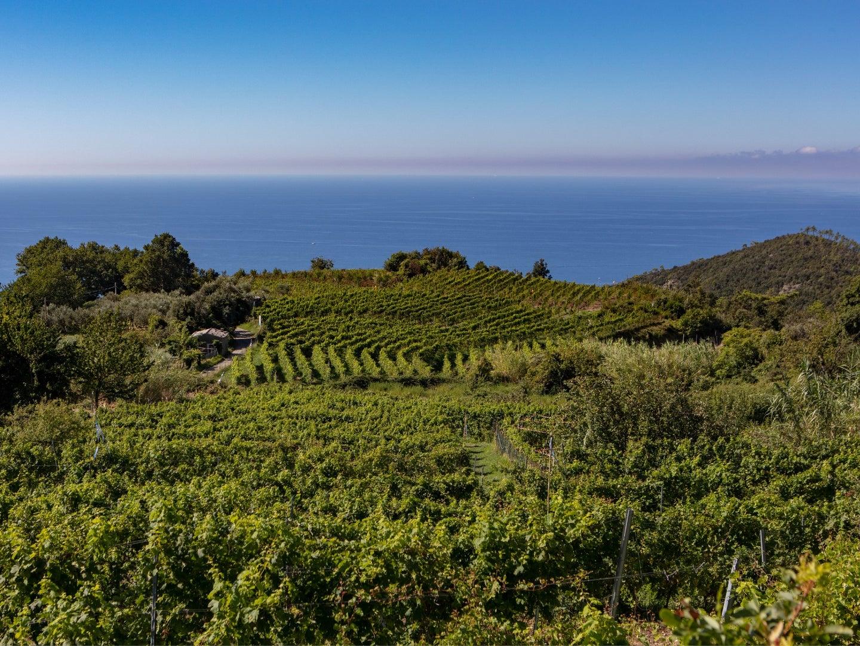 Liguria Italian Wine
